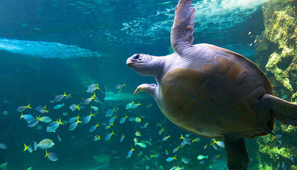 our-animals-turtle3