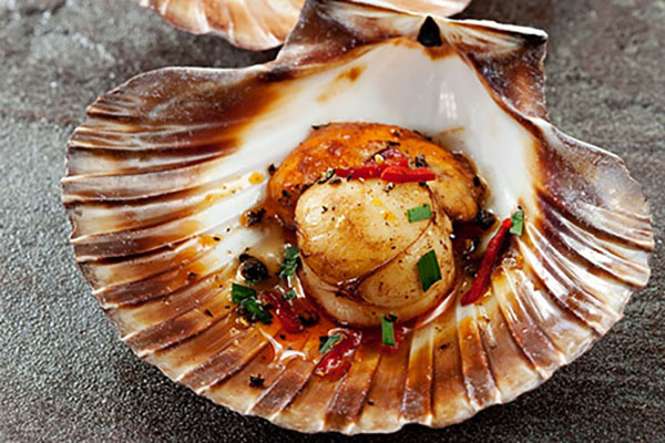 scallops-cooked-in-shell