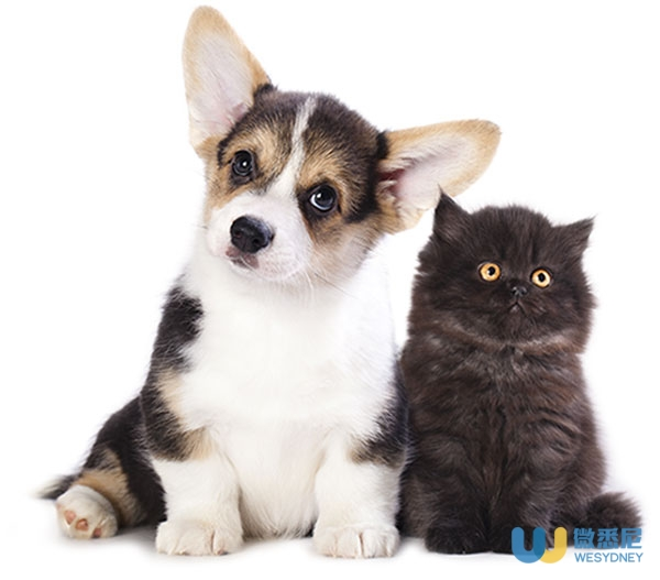 cat-and-dog_508